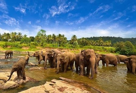 Taman Nasional Way Kambas - Tempat Wisata di Lampung