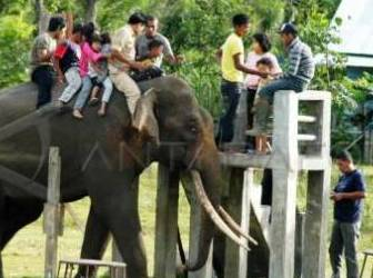 Pusat Latihan Gajah Saree