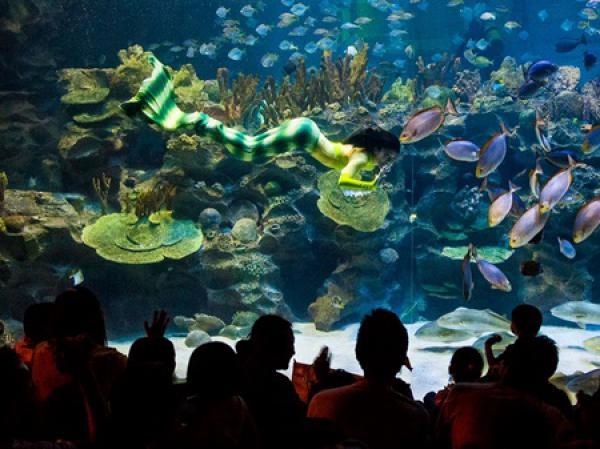 Aquaria KLCC via Travelmalaysia