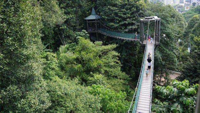 Kuala Lumpur Forest Eco Park - Tempat Wisata di Kuala Lumpur