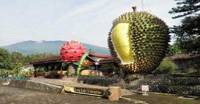 Warso Farm via inews