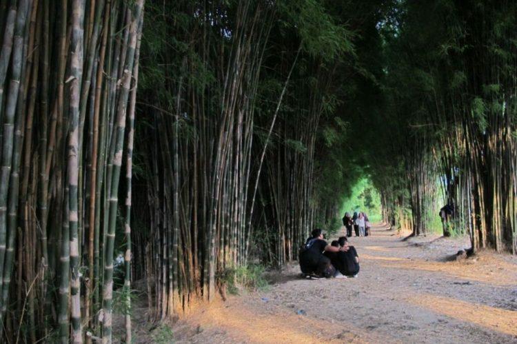Hutan Bambu Foto by Gmap Febrilla dhien