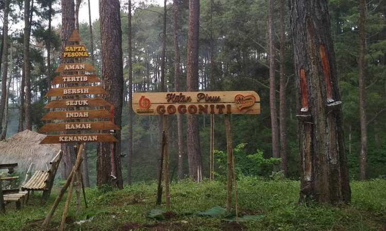 Hutan Pinus Gogoniti via IG @WisataGogoniti