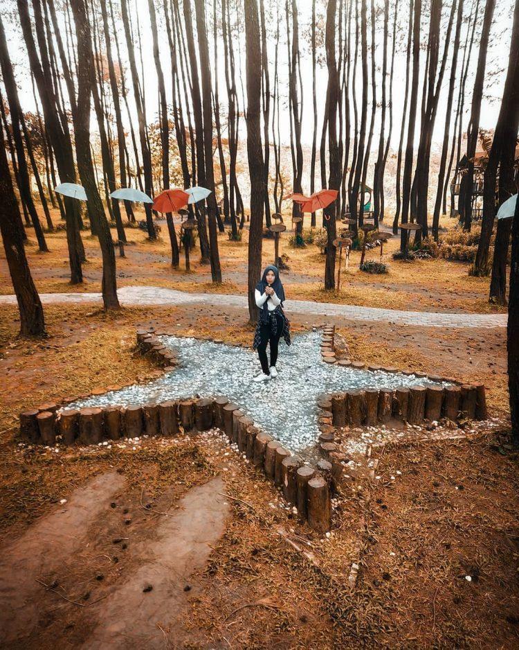 Hutan Pinus Semeru via IG @wandravisual