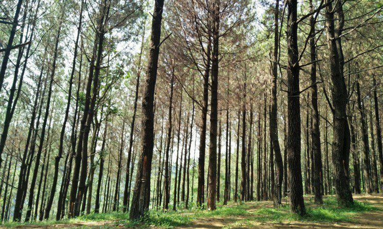 Hutan Wisata Sreni via Jeparaspezial.blogspotcom