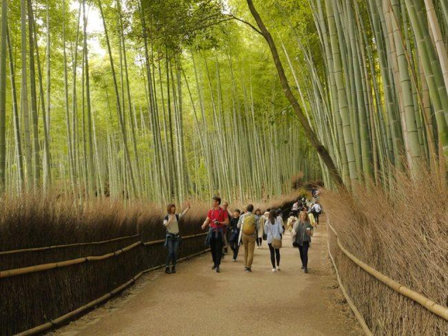 Kebun Bambu Arashiyama via Detik