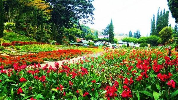 Kebun Bunga Cihideung di Bandung Utara