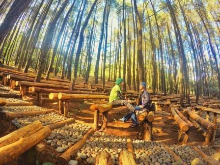 Kesejukan Dan Kesegaran Hutan Pinus Mangunan Jogja