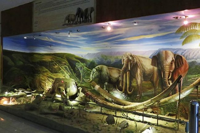 Museum Manusia Purba Sangiran via Kompas