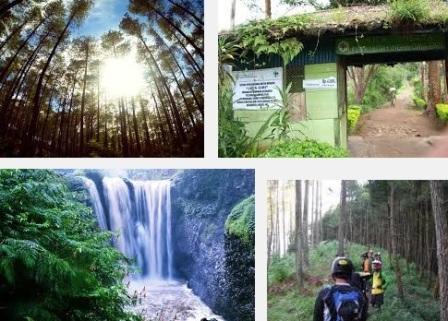 Objek Wisata Alam Taman Hutan Jaya Giri Lembang - tempat wisata di Lembang bandung