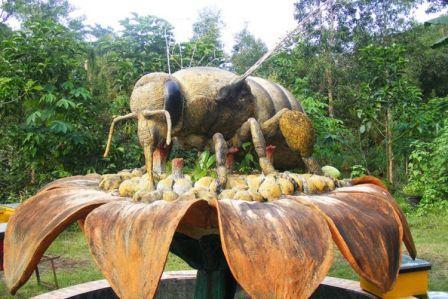 Objek Wisata Panen Madu di Agro Tawon Rimba Raya Malang
