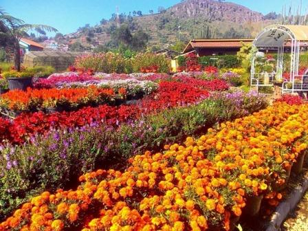 Obyek Wisata Keluarga Kebun Begonia Lembang
