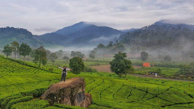Perkebunan Teh Rancabali Foto by Aris Priyandoko