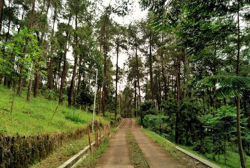 Taman Hutan Rakyat Ngargoyoso
