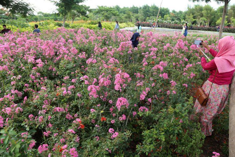 Taman Sakura Keputih via Sindo