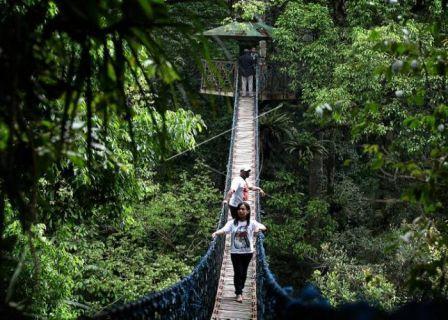 Taman nasional gunung halimun salak Sukabumi - tempat wisata di Sukabumi