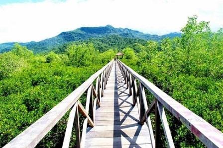 Tempat Wisata Alam Hutan Bakau Margomulyo Balikpapan