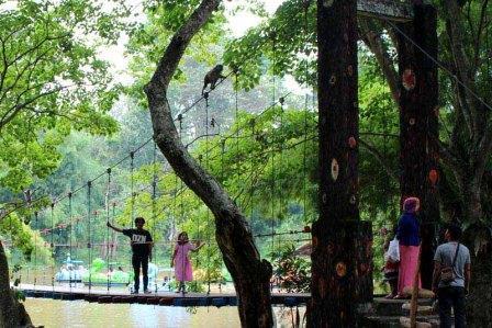 Tempat Wisata Alam Hutan Punti Kayu di Palembang