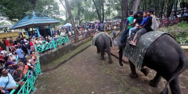 Tempat Wisata Kebun Binatang di Bandung