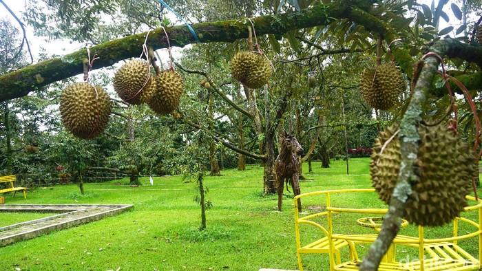 Warso Farm Puncak Bogor via Detik