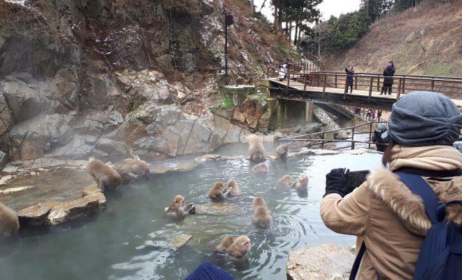 Wisata Jigokudani Monkey Park via Liburankejepang