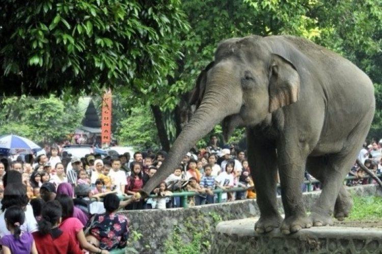 Wisata Kebun Binatang Surabaya via Tigapilarnews