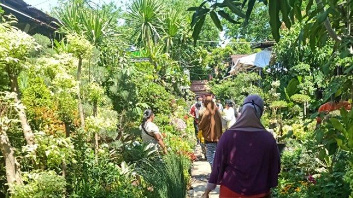 Wisata Pasar Bunga Bratang via Surya