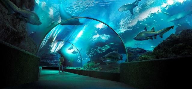 Wisata Siam Ocean World Bangkok