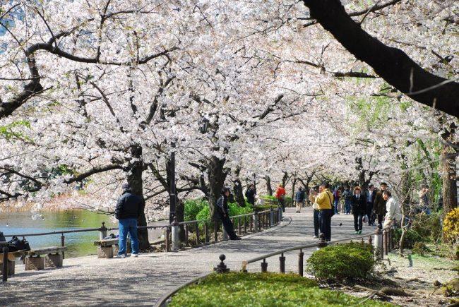 Wisata Ueno Park via Tripjepang