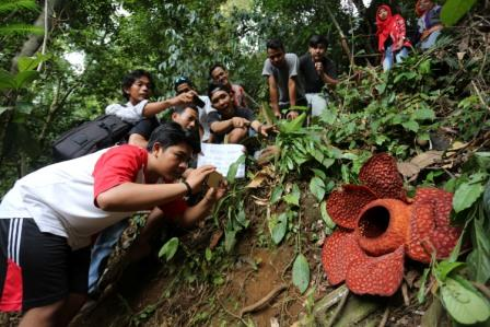 Wisata ke Habitat Bunga Rafflesia Arnoldii Bengkulu