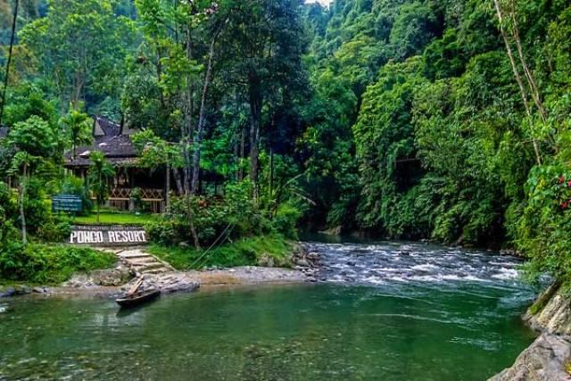 Destinasi Wisata Bukit Lawang di Sumatera Utara