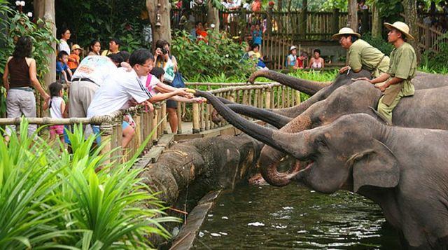 Kebun Binatang Medan (Medan Zoo) - tempat wisata di Medan