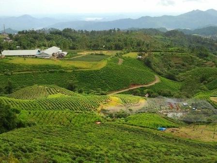 Liburan Asyik ke Kebun Teh Malino di Makassar