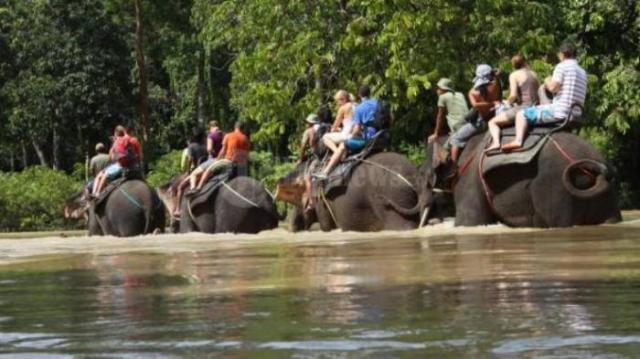 Mencoba Keseruan Naik Gajah di Tangkahan