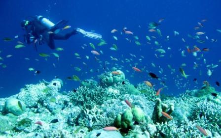 Objek Wisata Taman Laut Taka Bonerate di Makassar