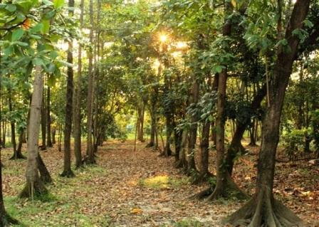 Tempat Wisata Alam Hutan Kota di Bekasi