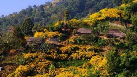 Tempat Wisata Doi Mae Hua Kham di Thailand