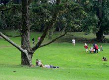 Tempat Wisata Keluarga Kebun Raya Cibodas di Cianjur