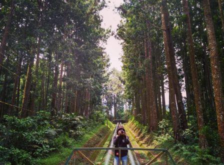 Tempat Wisata Seru di Baturraden Adventure Forest Purwokerto