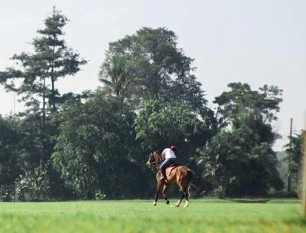 Wisata Sambil Olahraga di Pacuan Kuda Tapos - tempat wisata di Depok