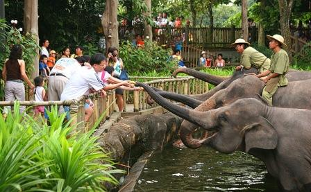 Tempat Wisata Keluarga - Singapore Zoo