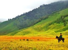 Padang Savana Gunung Bromo ( Bukit Teletubbies )