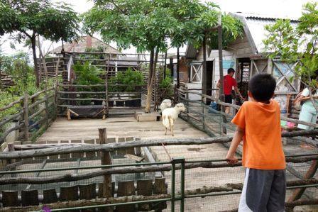 Tempat Wisata Anak Unik Kebun Binatang Mini di Atap Sebuah Mall di Bandung