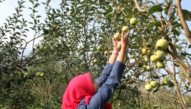 Agrowisata Petik Apel Bumiaji