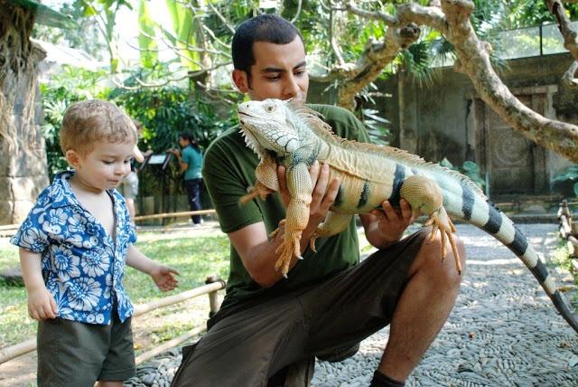 Bali Bird & Reptile Park