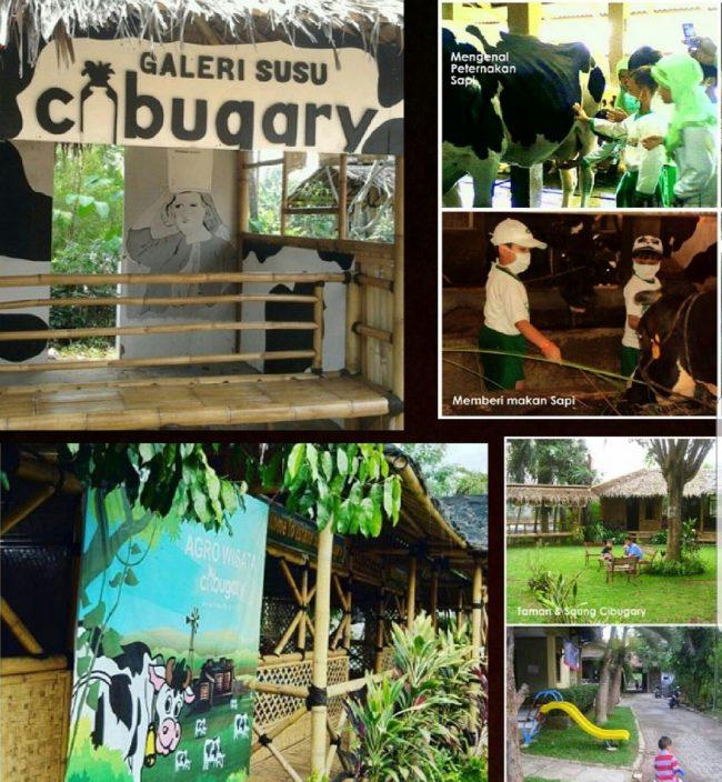Cibubur Garden Diary