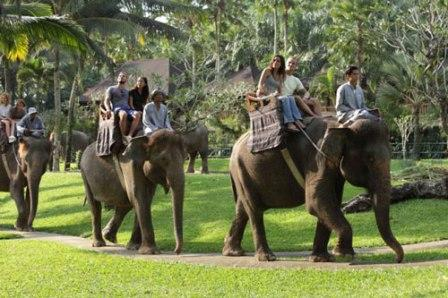 Menunggangi Gajah Di Desa Taro Ubud - Tempat wisata di Ubud