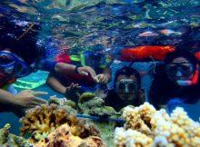 Snorkeling di Pulau Pari Nan Eksotis