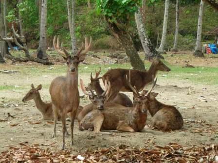 Objek Wisata Cagar Alam Pananjung Pangandaran