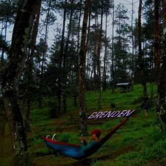 Hutan Pinus Grenden
